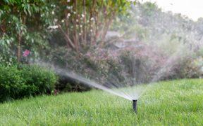 Podstawowe zasady nawadniania ogrodu