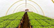 Uprawa warzyw w skrzyniach – czy to moze sie udac